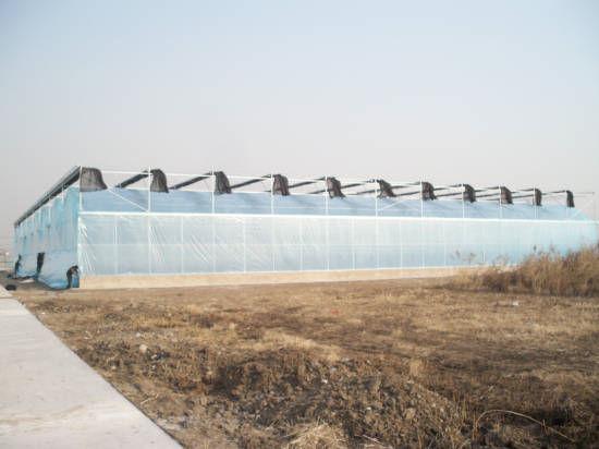 天津小马沽蔬菜观光示范园