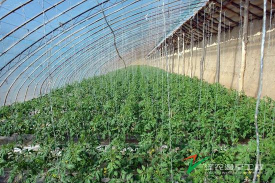 内蒙乌拉特后旗金朗泰设施农业基地